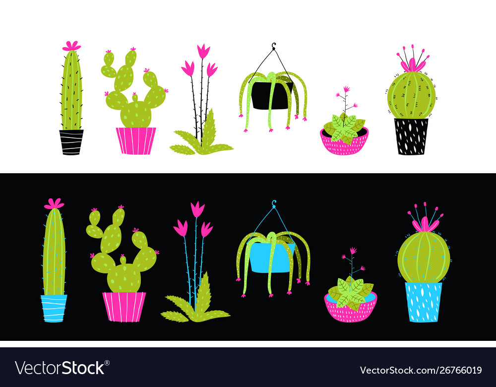 Cacti cactus and succulent flowers interior