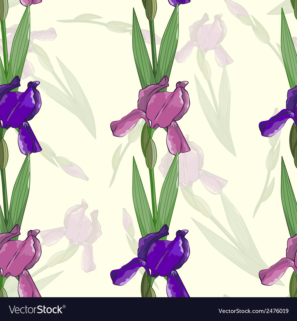 Seamless pattern with irises flowers vector image