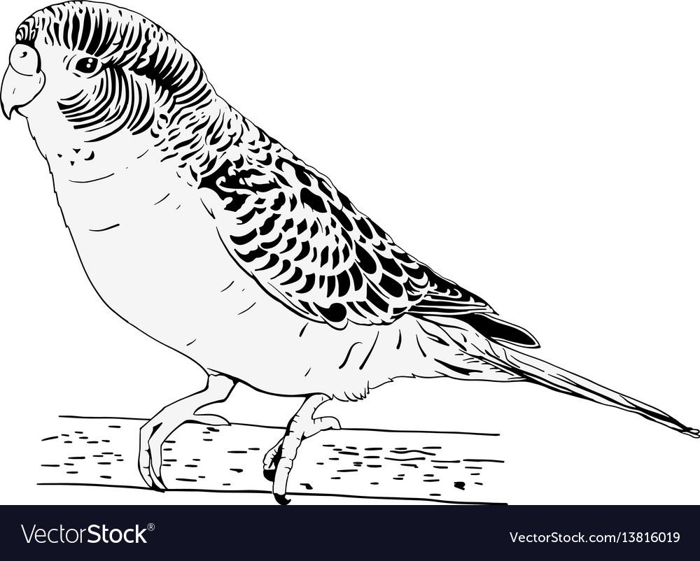 Wavy parrot vector image