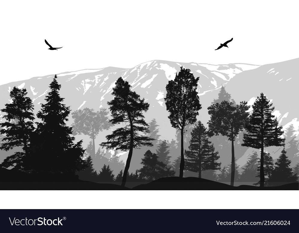 Pine forest landscape background