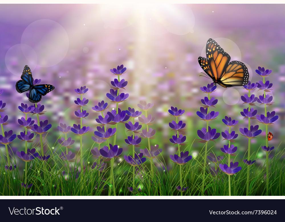 Purple tulips background vector image