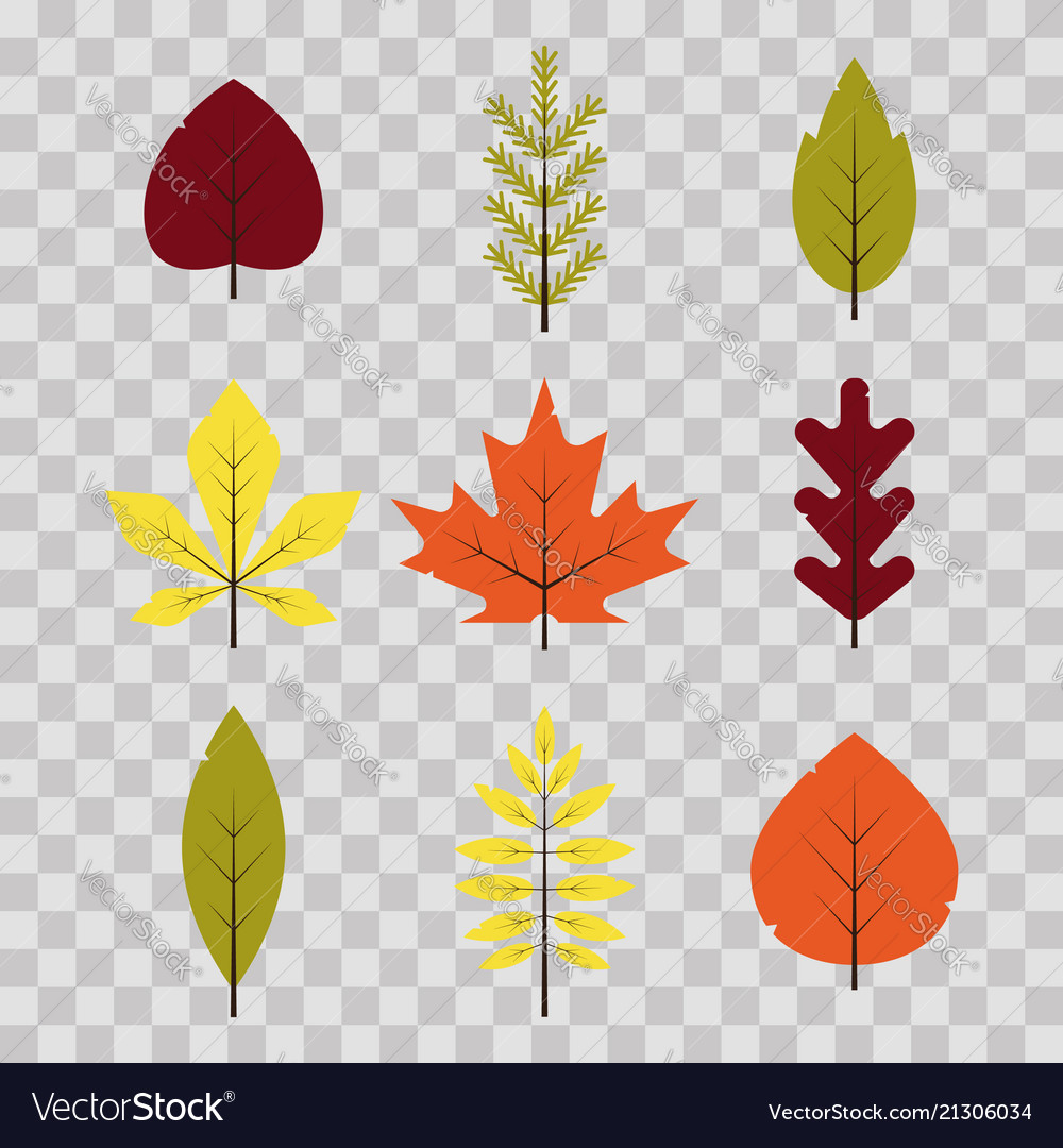 Autumn different leaves set in flat style red