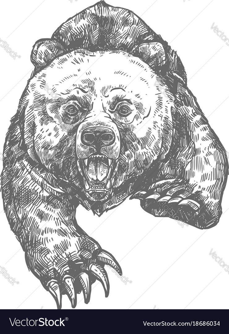 Bear attack isolated sketch of aggressive animal