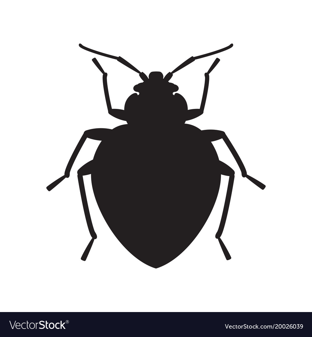Bedbug insect silhouette vector image