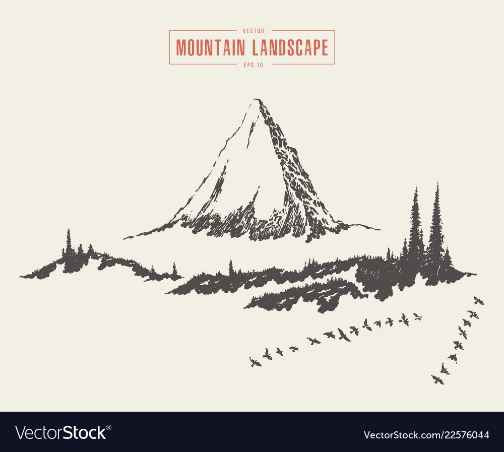 Mountain landscape fir forest drawn sketch