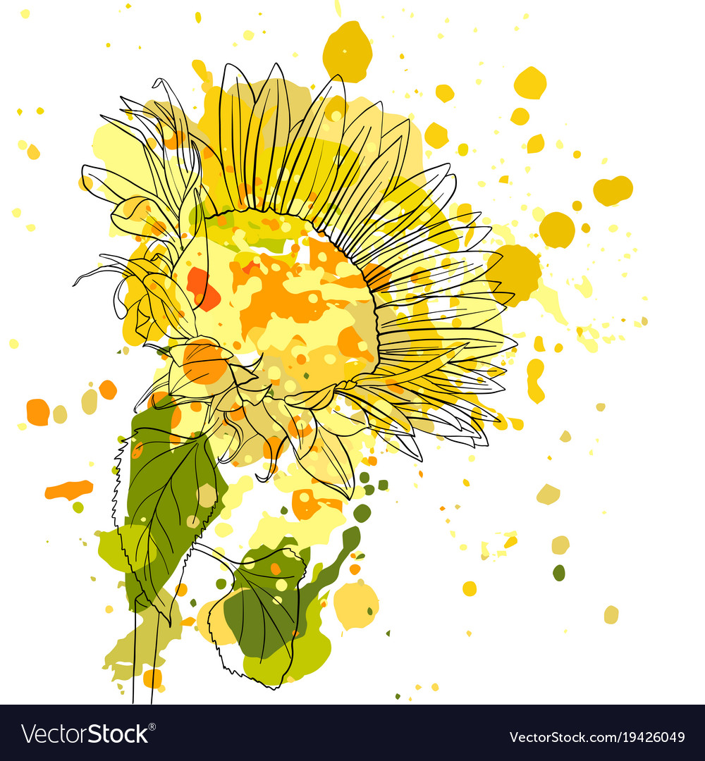 Drawing sunflower