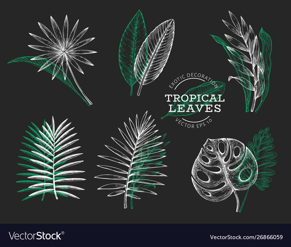 Set tropical leaves hand drawn tropical summer