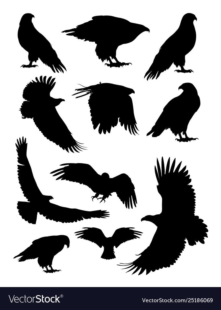 Eagle birds animal detail silhouettes