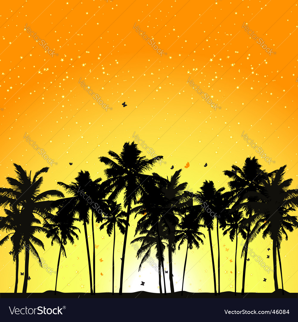 tropical sunset palm trees royalty free vector image