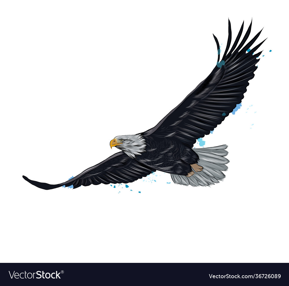 Flying bald eagle from a splash watercolor
