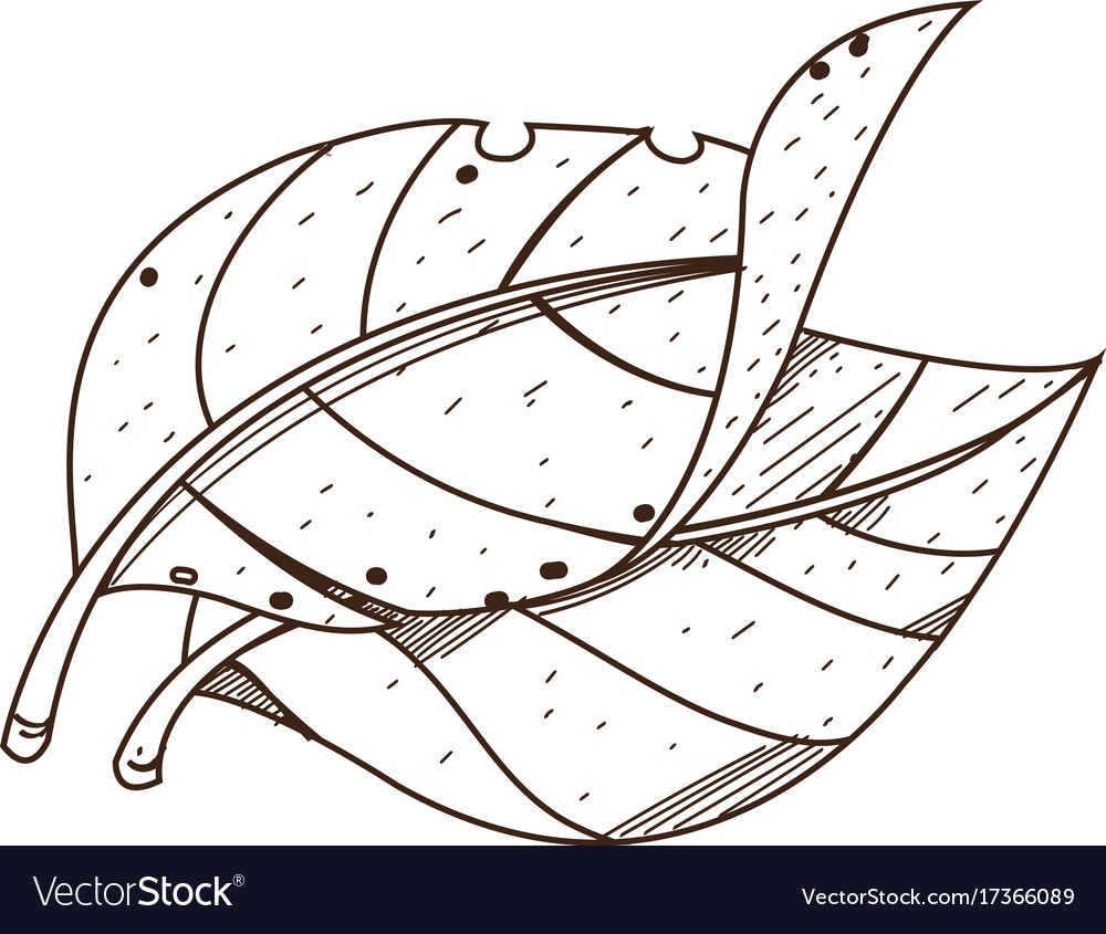 Leaves Tobacco Outline Drawing For Coloring On Vector Image