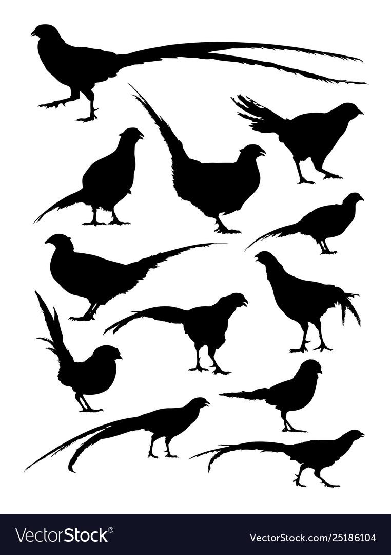 Pheasant animal detail silhouettes