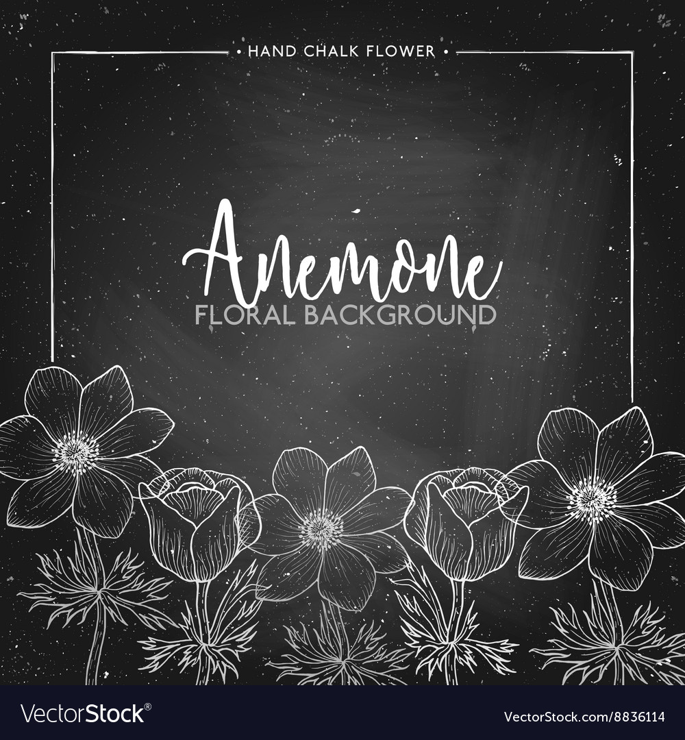 Anemone floral background on chalkboard