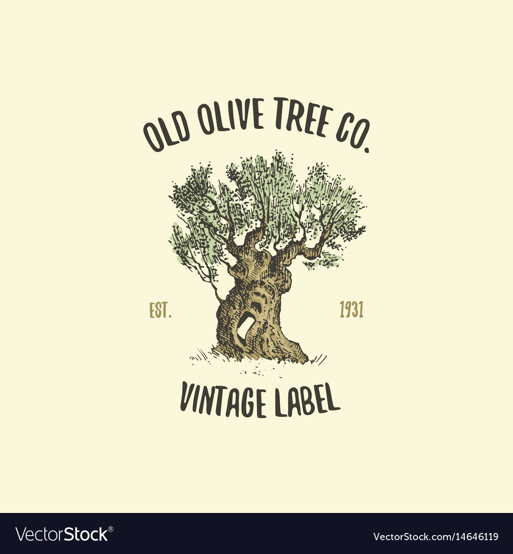 Olive tree logo engraved or hand drawn isolated