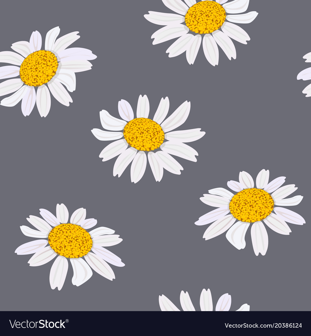 Daisy Flowers Heads Seamless Pattern Royalty Free Vector