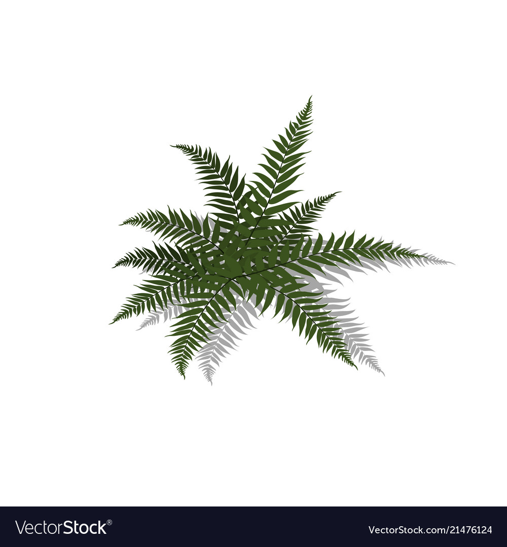 Plant in isometric style cartoon tropical fern