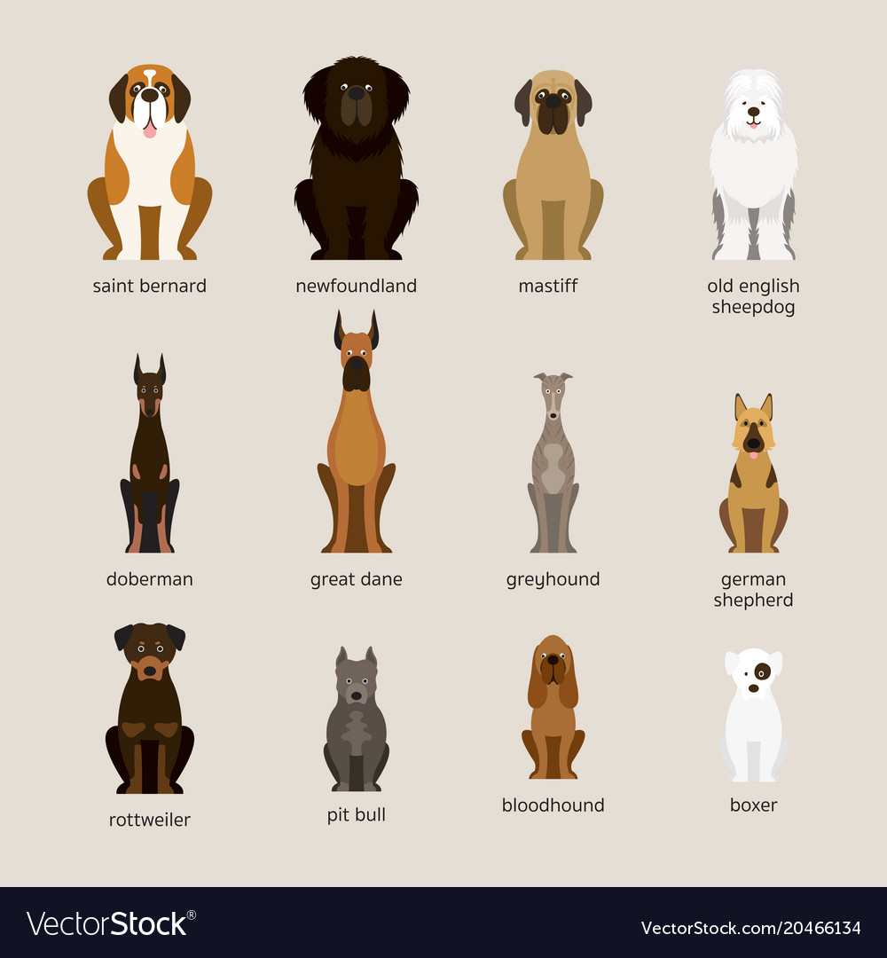 Dog Breeds Set Giant And Large Size