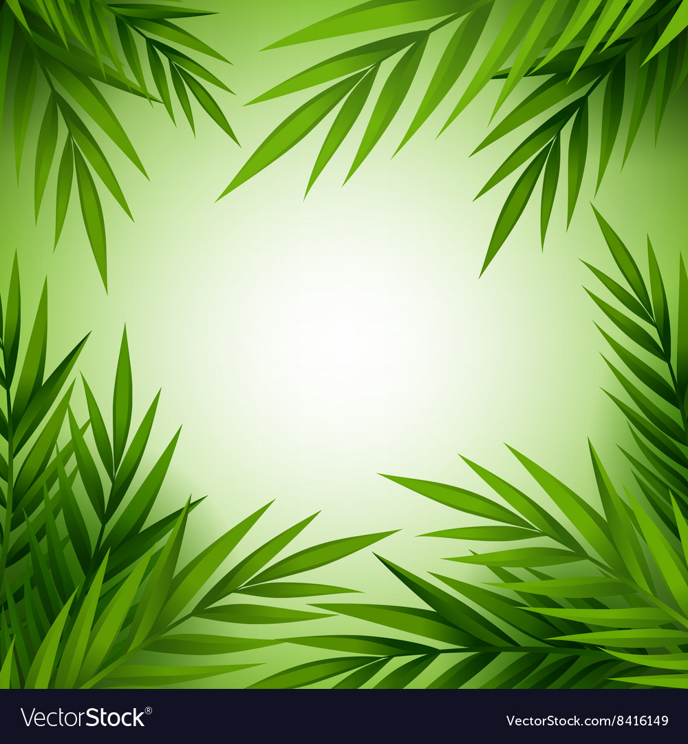 Tropical palm tree background