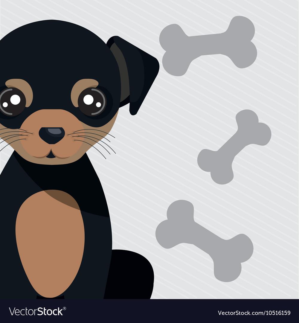 Dog pet bone icon