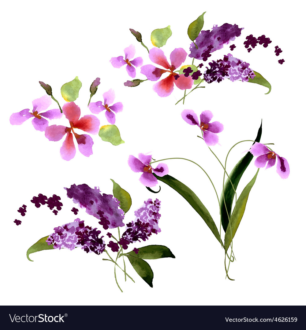 Lilac flowers Watercolor floral