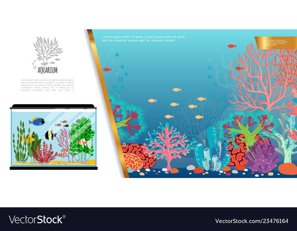 Flat aquarium bright composition