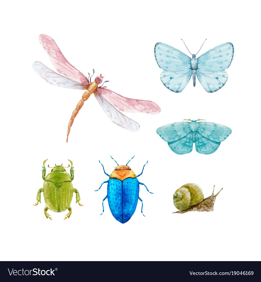 Watercolor insect set