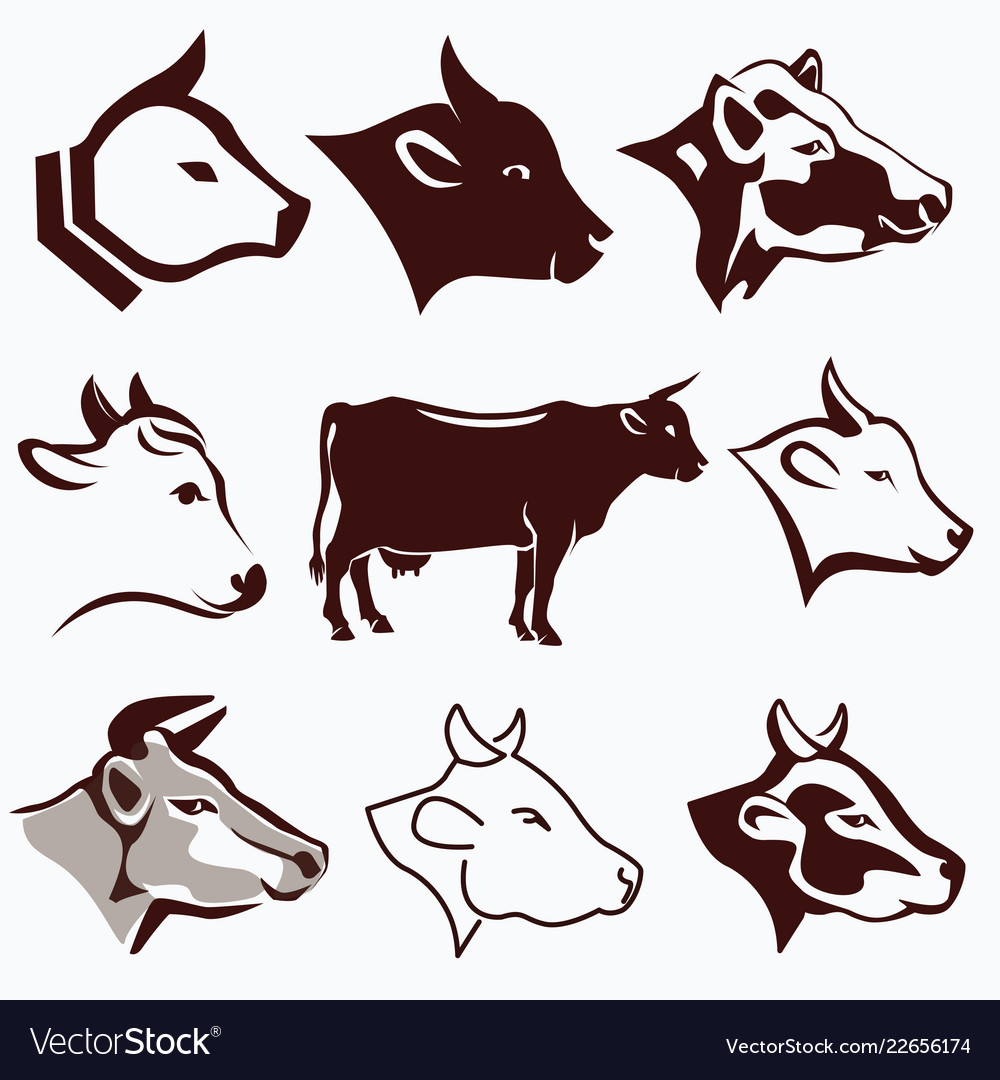 Cow head portraits collection in different styles