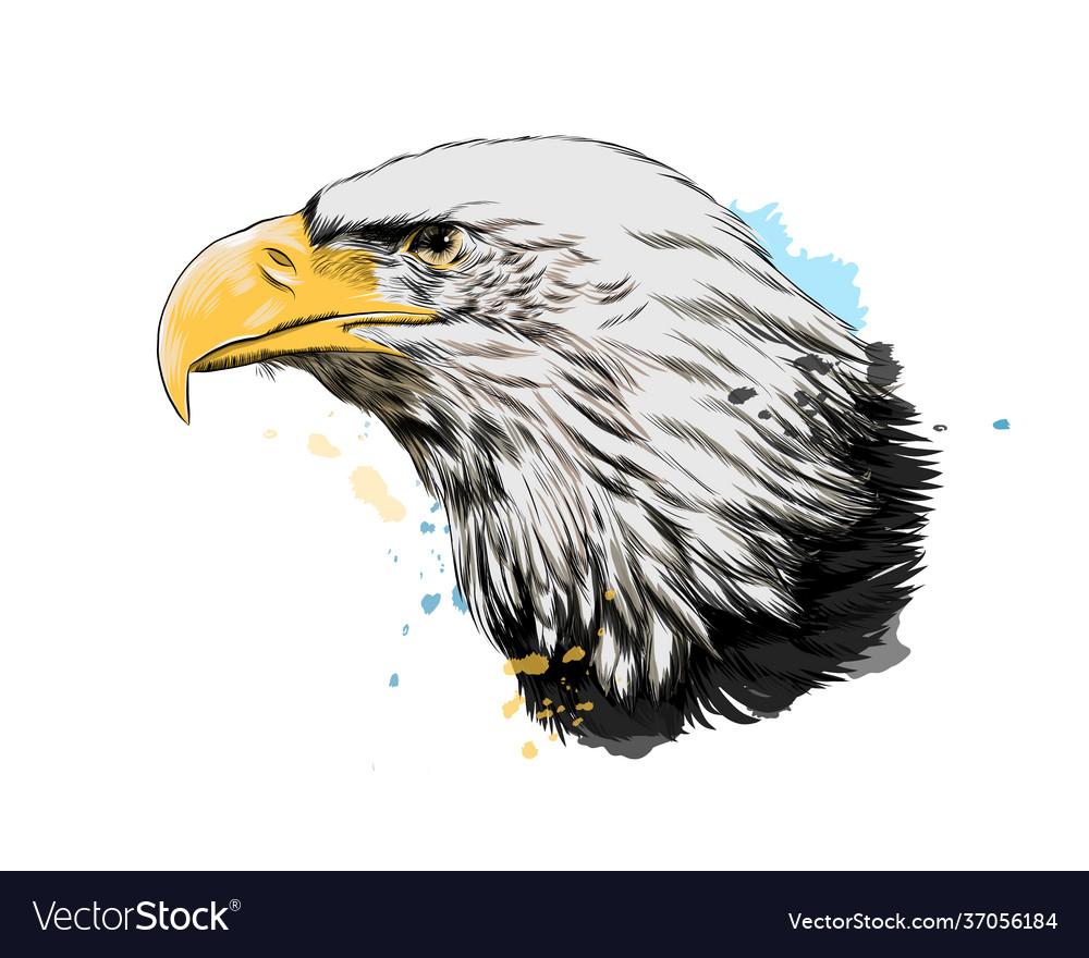 Bald eagle head portrait from a splash of