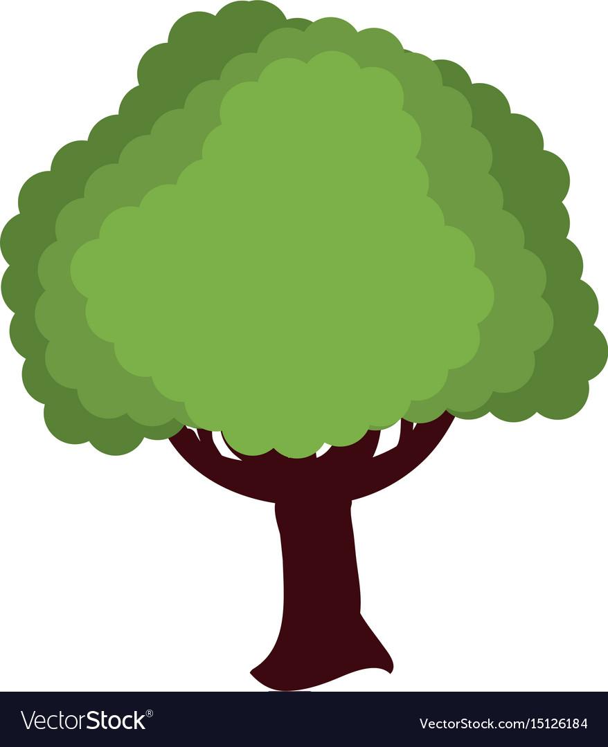 Beautiful tree isolated