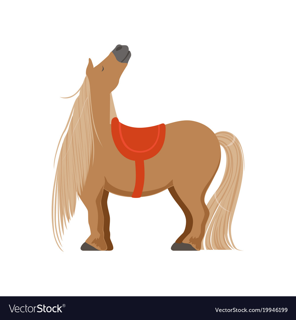 Cute pony with saddle thoroughbred horse
