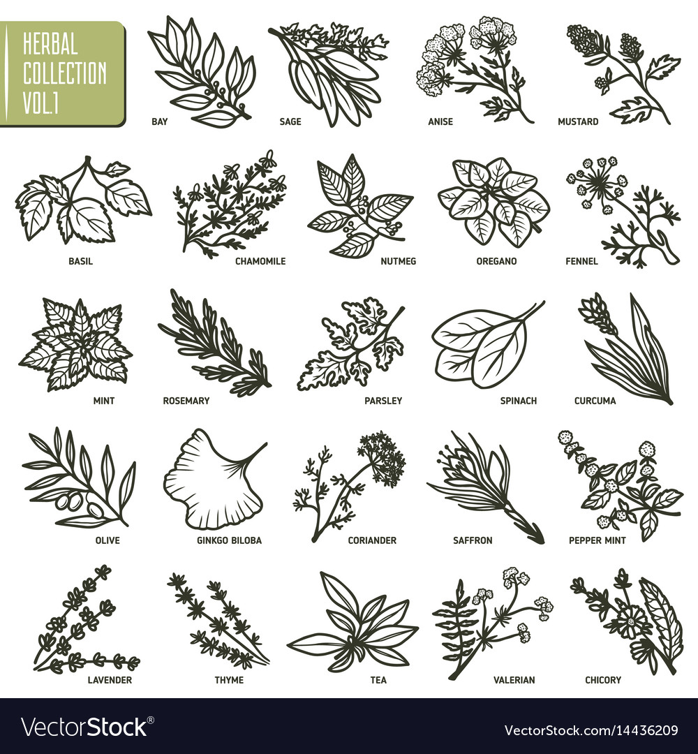 Hand drawn set of herbs and spices vintage