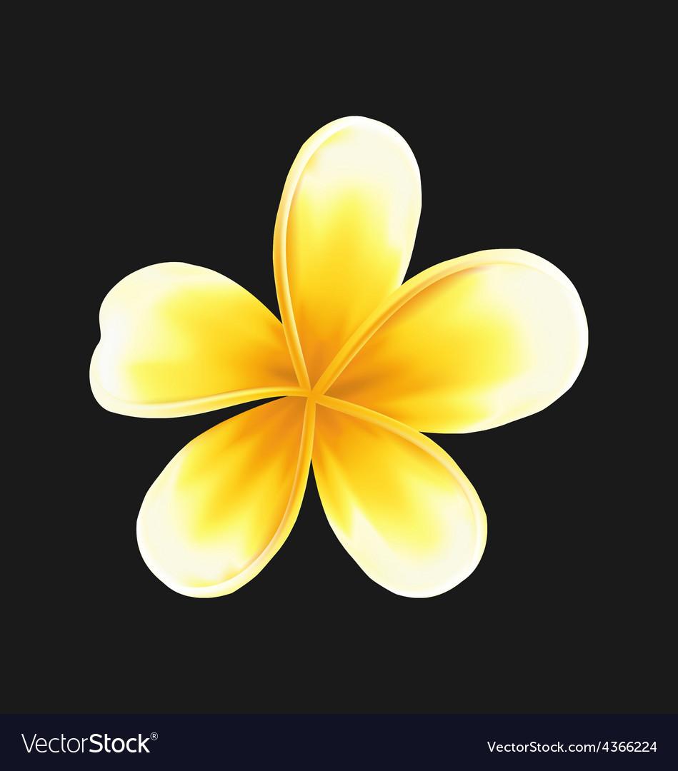 Download 8400 Background Bunga Jepun HD Gratis