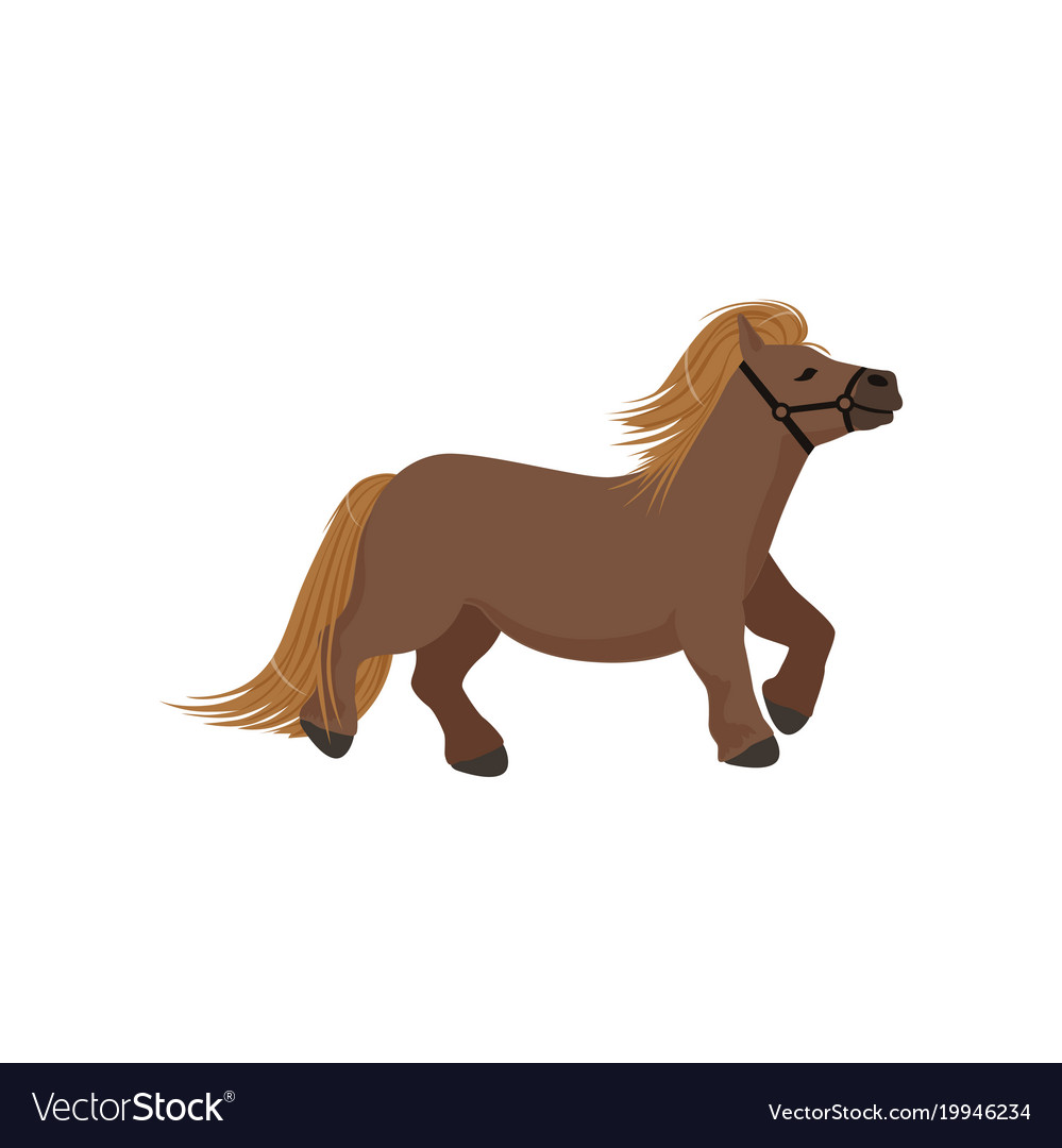Cute brown pony thoroughbred horse