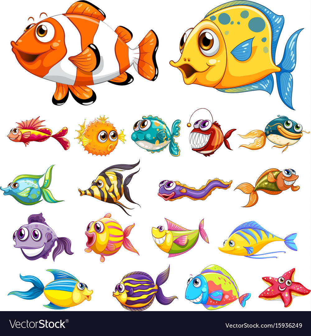 Different Types Of Fish Royalty Free Vector Image