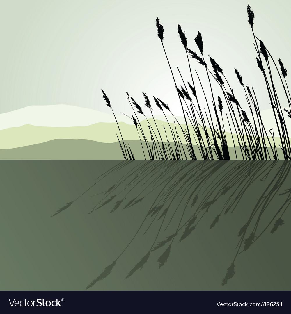 Landscape view Reeds