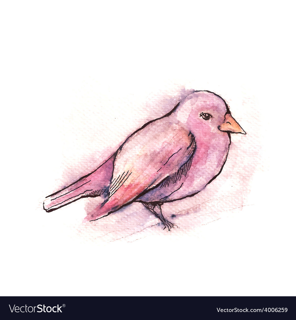 Hand drawn pink bird watercolor style