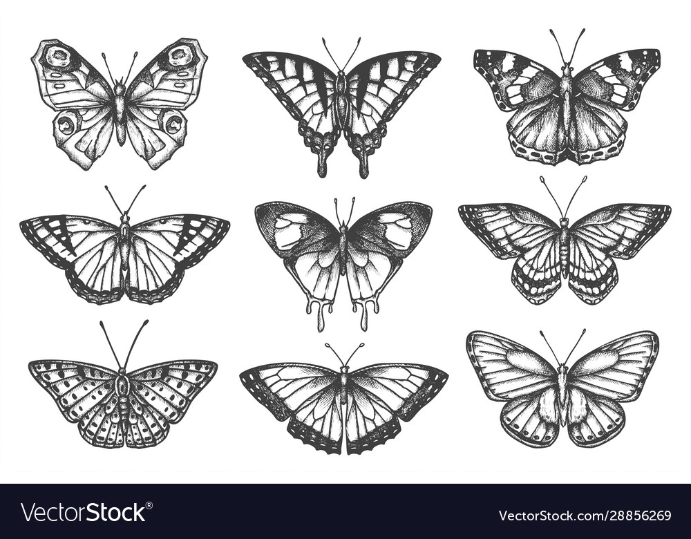 Set isolated sketch butterfly or moth