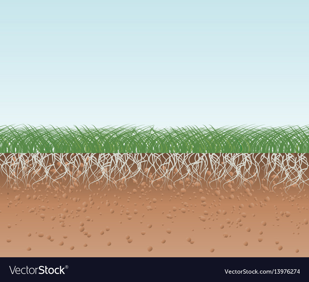 Grass with roots and soil vector image