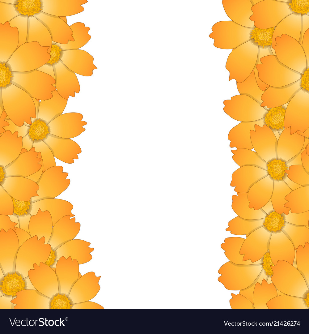 Orange Yellow Cosmos Flower Border Royalty Free Vector Image
