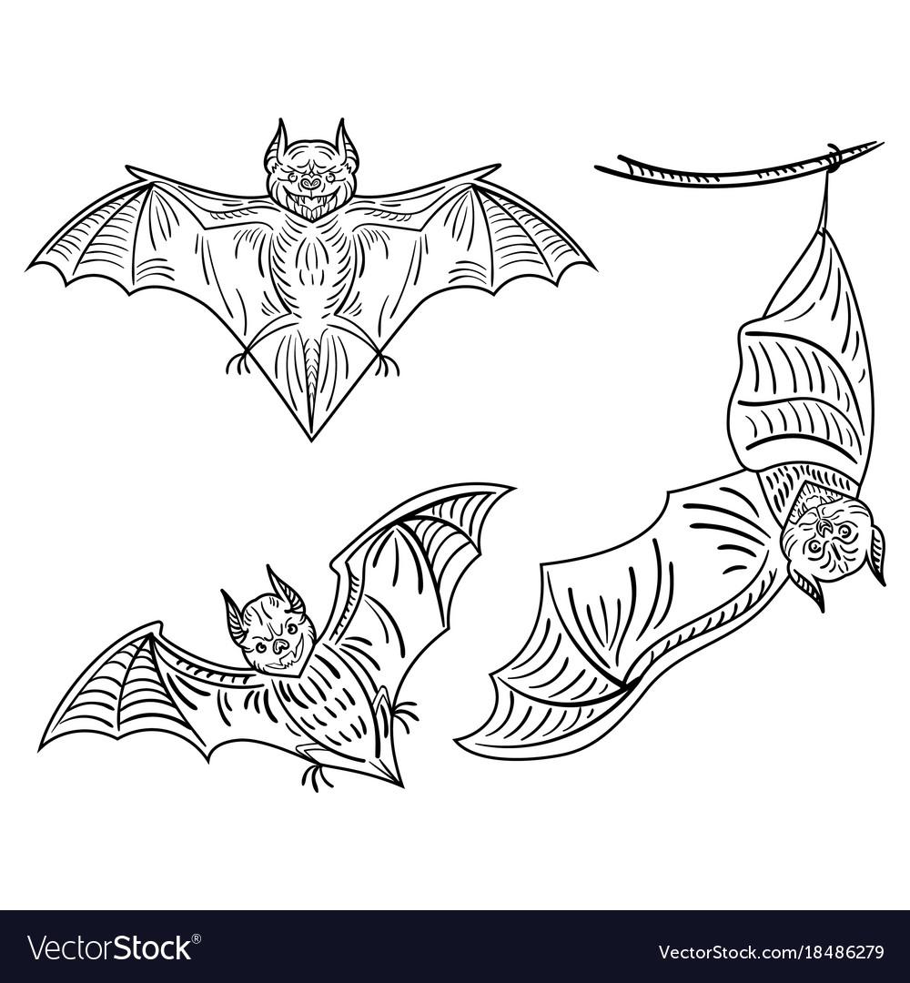 Set bats a collection terrible bats