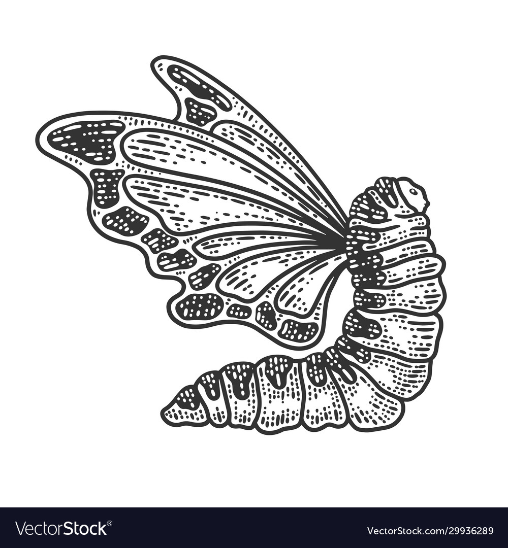 Caterpillar with butterfly wings sketch