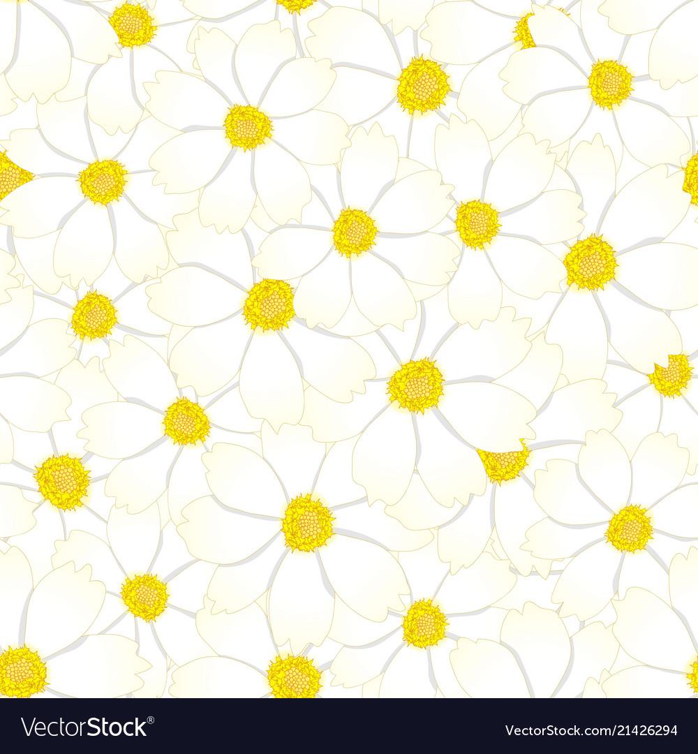 White cosmos flower seamless background