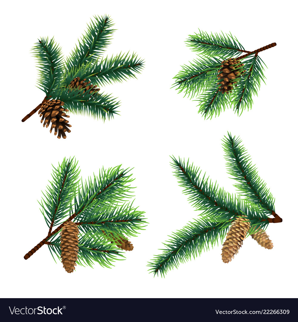 Christmas Branch Tree.Fir Branch Christmas Tree Branches With Cones