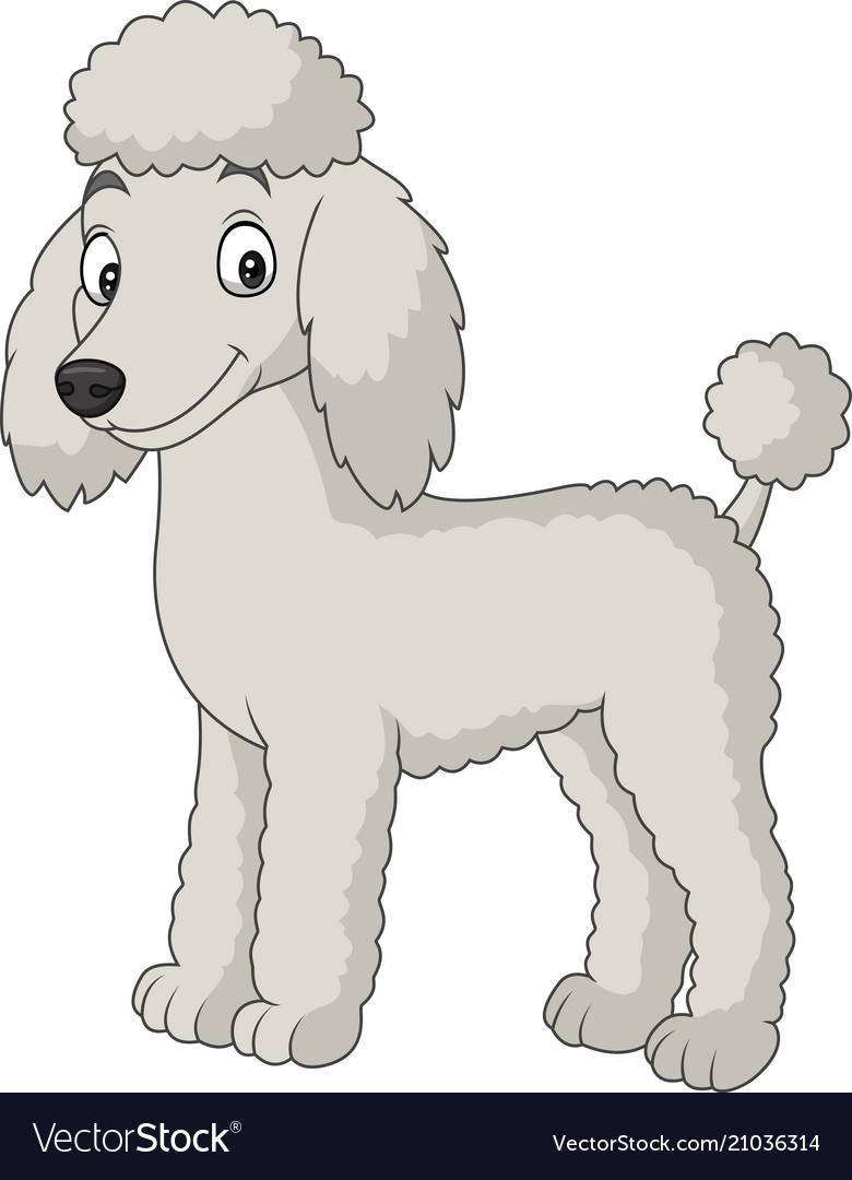 Cartoon poodle dog isolated on white background