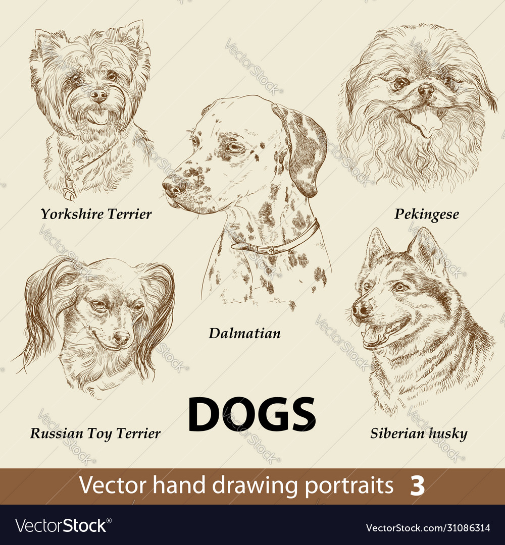 Set hand drawing dogs 3
