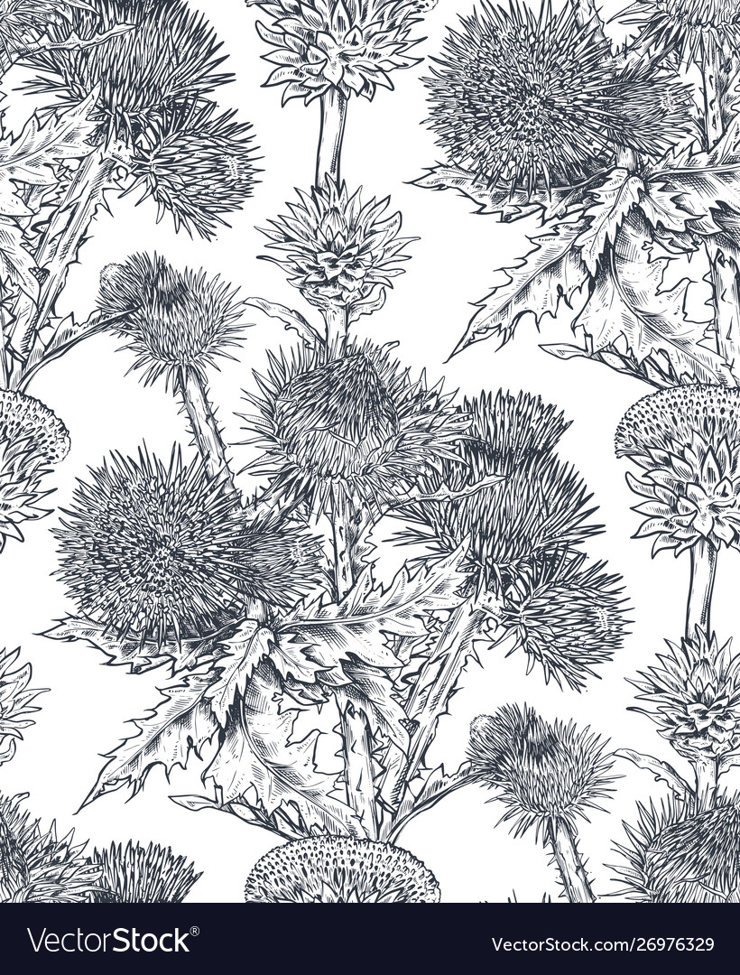 Seamless pattern with hand drawn thistle or