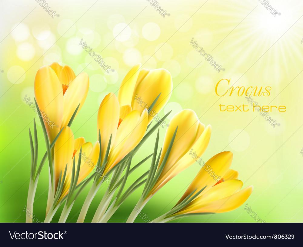 Yellow Crocus Royalty Free Vector Image Vectorstock