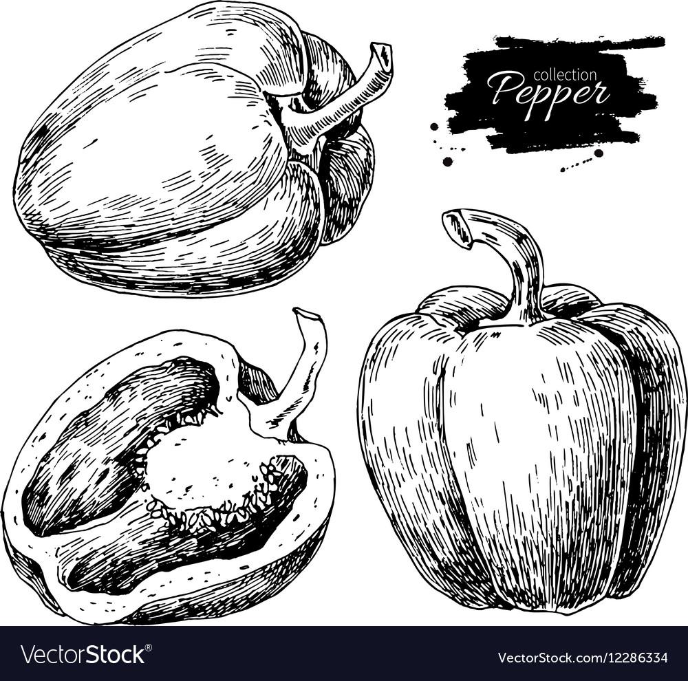 Pepper hand drawn set Vegetable engraved vector image