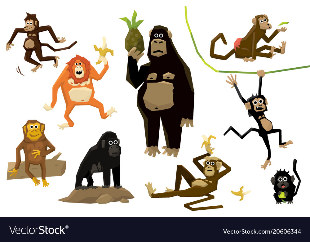 Funny monkey set monkeys of various breeds in vector image