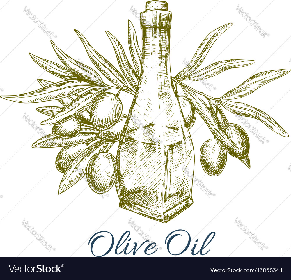 Oil bottle with olive fruits sketch poster